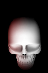 Skull Top View