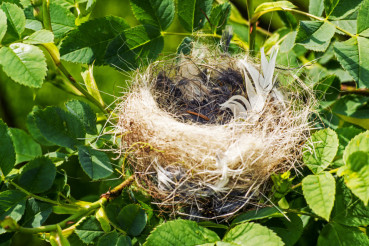 Small Bird Nest