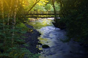 Small Forest Bridge