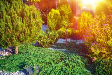 Small Rockery Garden