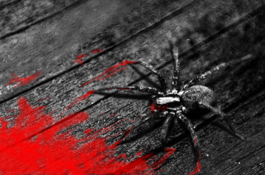 Spider and the Blood