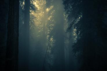 Spooky Dense Forest Fog