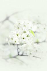 Spring Branch Flowers