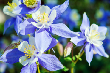 Spring Flowers Closeup