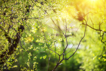 Spring Vegetation Background