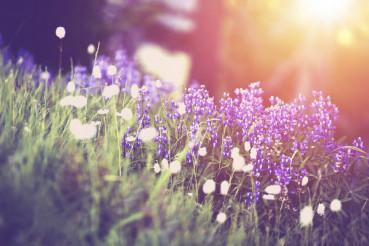 Spring Wildflowers Scenery