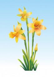 Spring Yellow Jonquils