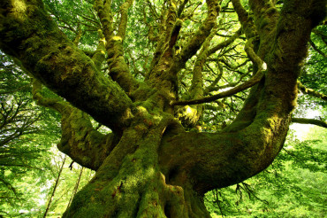 Strange Mossy Tree