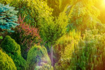 Summer Sunshine in the Garden