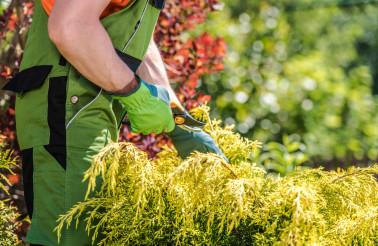 Summer Time Garden Plants Trimming