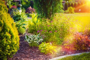 Sunny Summer Garden