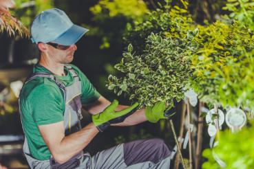 Taking Care of Garden Plants