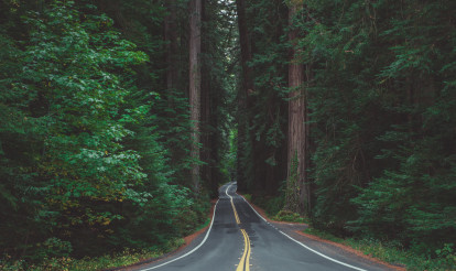 The Avenue of the Giants California Scenic Redwood Trees Highway