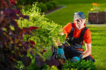 The Garden Designer