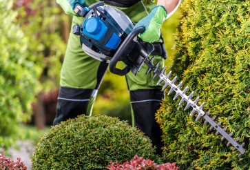 Thujas Green Wall Shaping with Hedge Trimmer