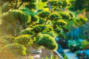 Topiary Art Garden Plants