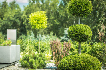 Topiary Art of Clipping Shrubs