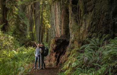 Tourist Exploring California Coastal Redwoods Forest