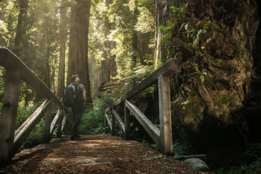 Tourist with Backpack on the Redwood Forest Trail