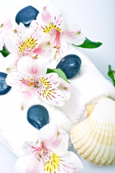 Towels, Flowers and Shells
