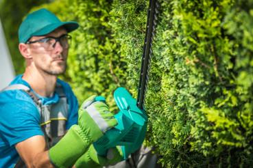 Trimming Green Tree Wall