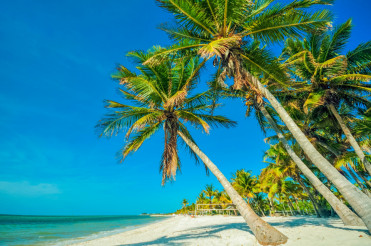 Tropical Beach with Palms