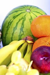 Tropical Fruits Vertical