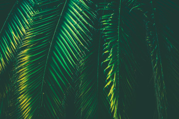 Tropical Palm Leaves Nature Background