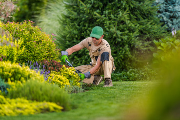 Professional Gardener Pruning Bushes And Shrubs.