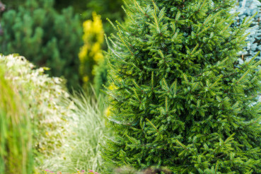 Ornamental Trees And Plants In Garden.