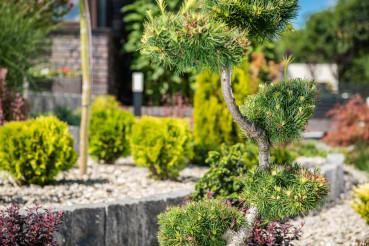 Ornamental Garden Landscaping Concept.