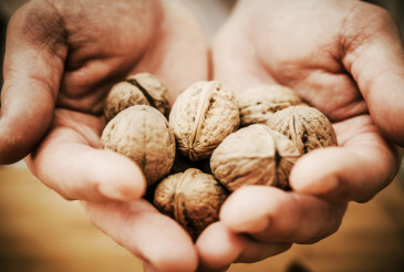 Walnuts in Chef Hands