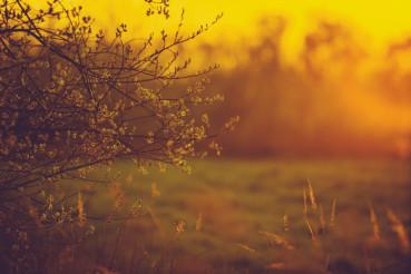 Warm Sunset Light Landscape