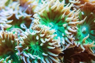 Whisker Coral Marine Aquarium