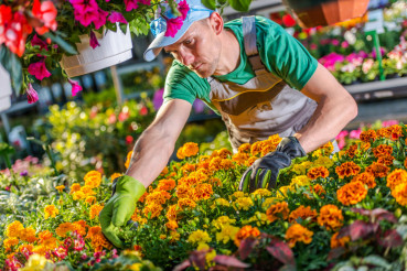 Wholesale Florist Job