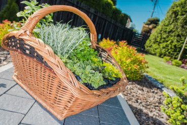 Wicker Basket Full of Plants