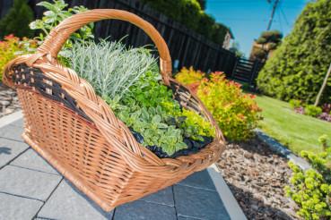 Wicker Basket Full of Plants