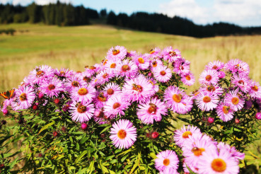 Wild Flowers Meadow