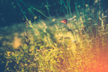 Wild Meadow with Butterfly