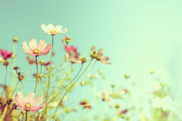 Wildflowers Summer Background