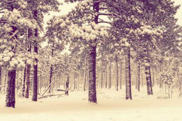 Winter Forest Vista