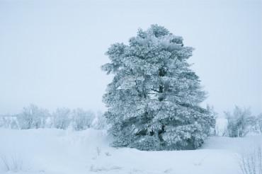 Winter Landscape Theme.