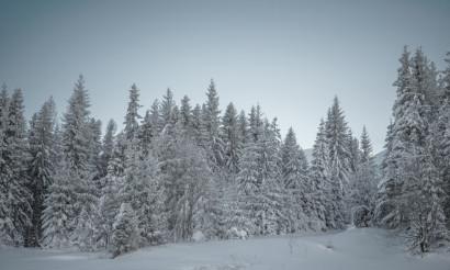 Winter Woodland Scenery