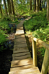 Wooden Pathway Trail