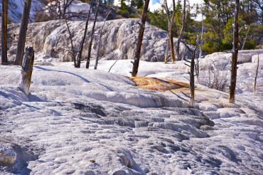 Yellowstone Travertine
