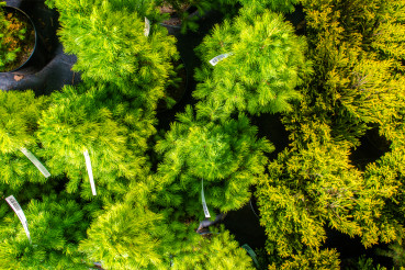 Small Evergreen Trees In Pots.