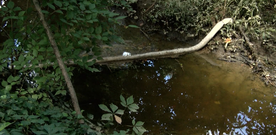 Photo of Gallons Of Used Cooking Grease Found In Evansville Stream