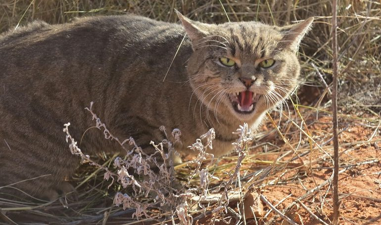 Committee Passes Bill Amending Feral Cat Law