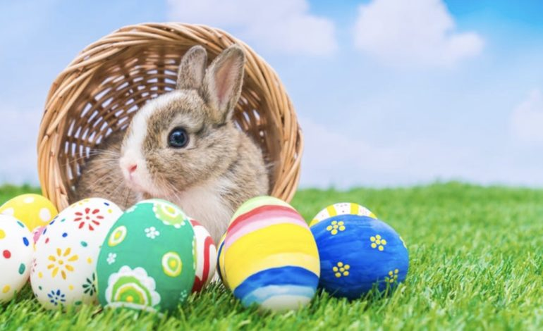 Want to Meet the Easter Bunny?
