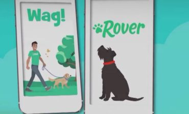 Experts Say Use Caution Before Using Dog Walking Apps
